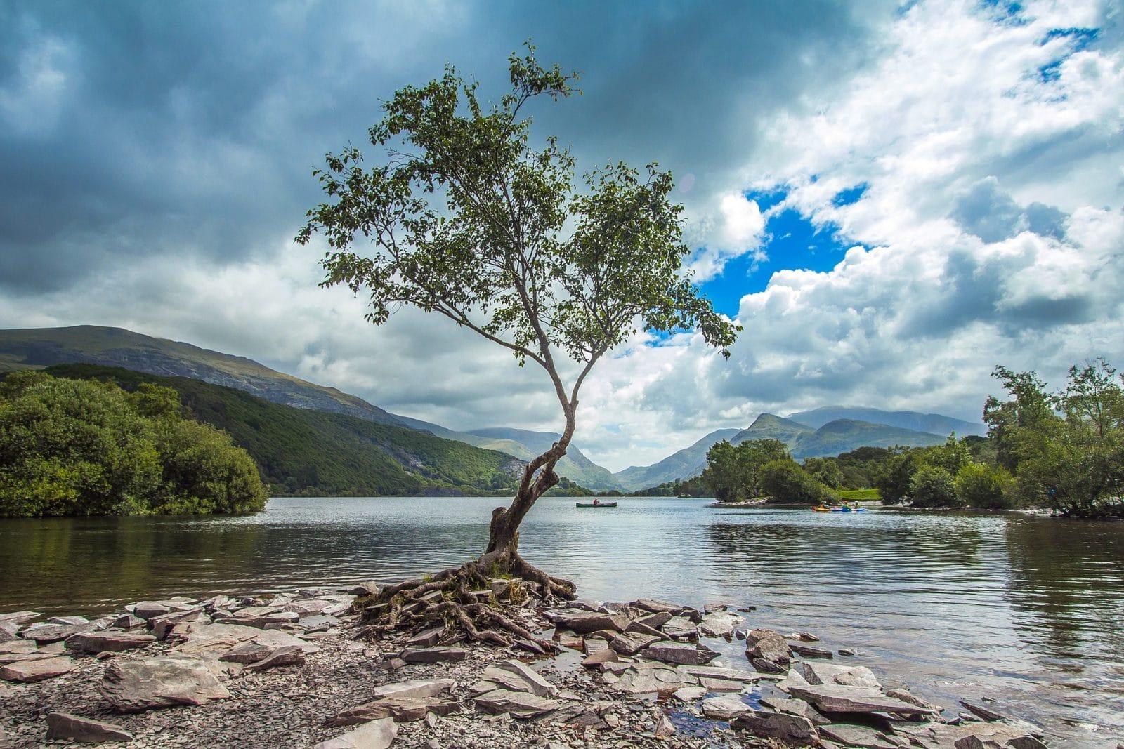 Snowdonia tree by lake