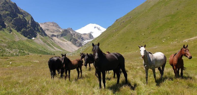 Mount Elbrus trek Russia