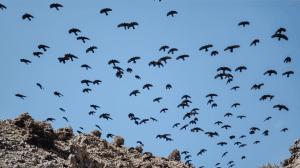 Mount Toubkal trek - wildlife