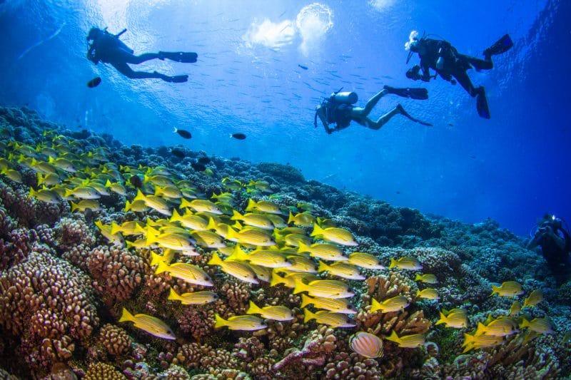 Scuba diving Gozo Malta