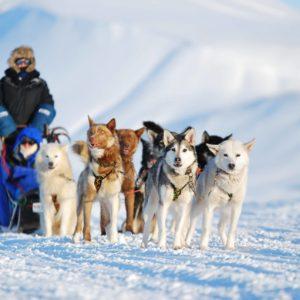 Included in bucket list trip Dog Sledding
