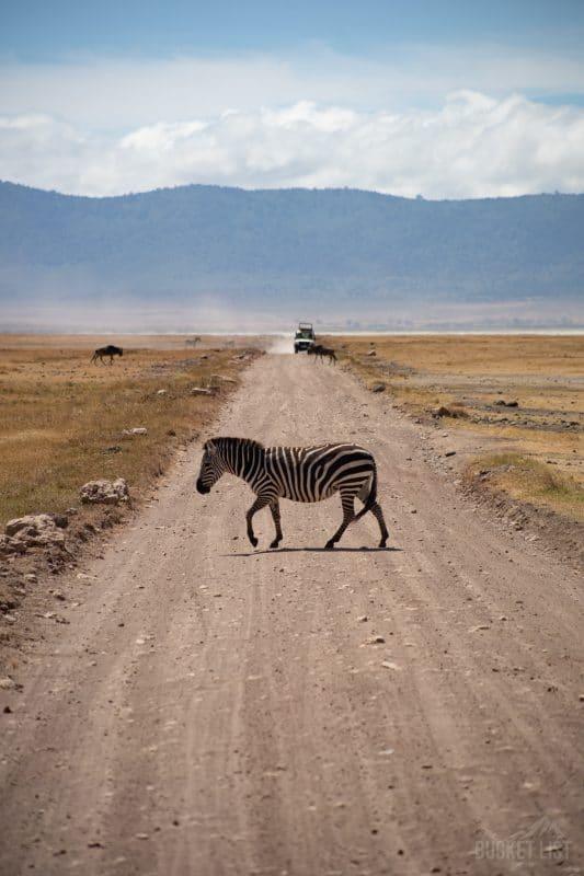 Tanzania trip safari