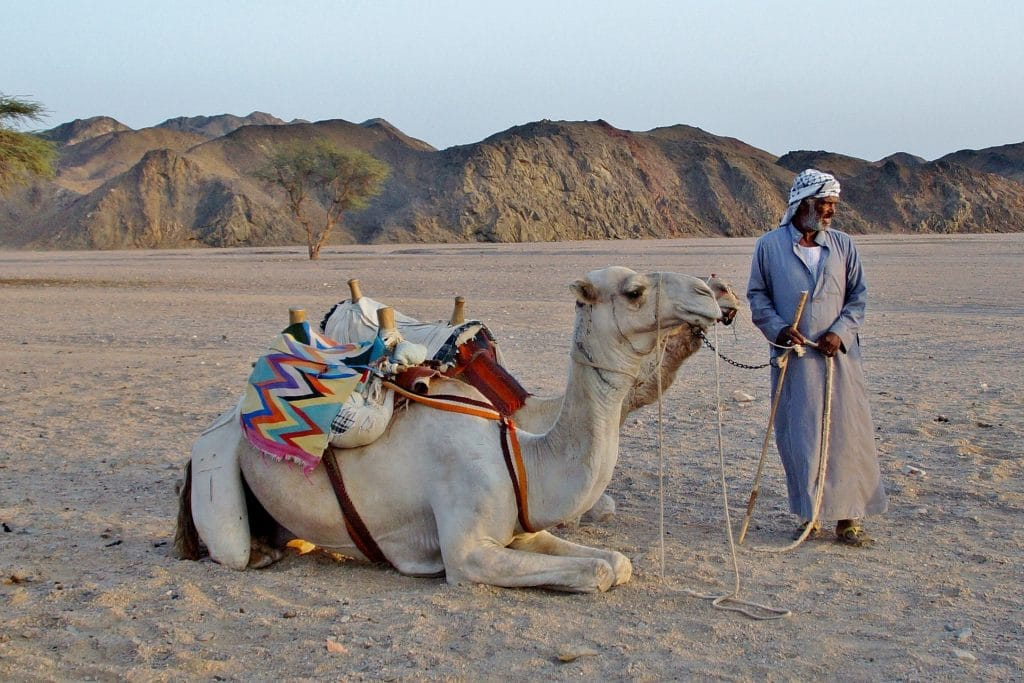 Bedouin nomad with camel in the Sahara