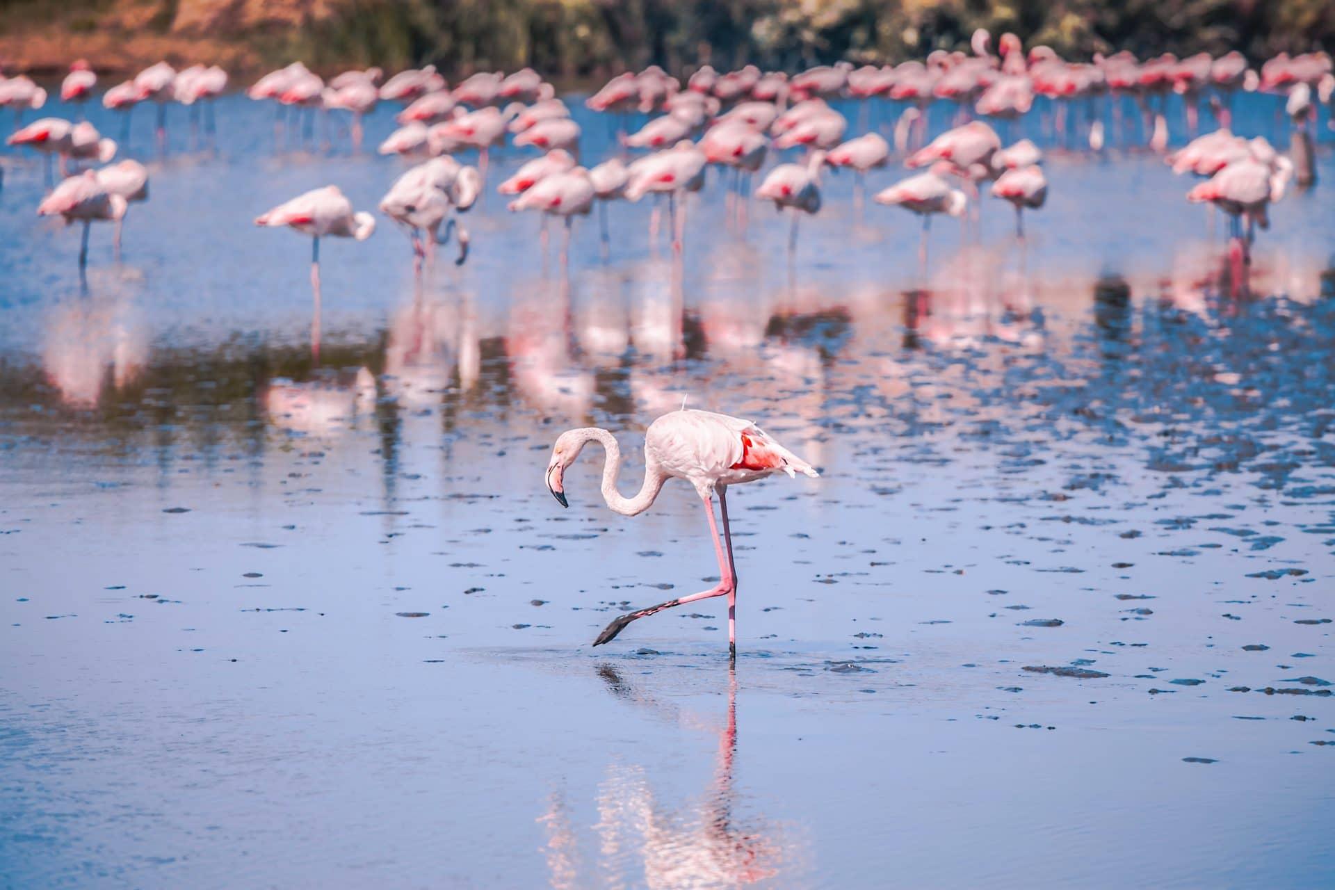 Flamingoes on safari holiday Tanzania