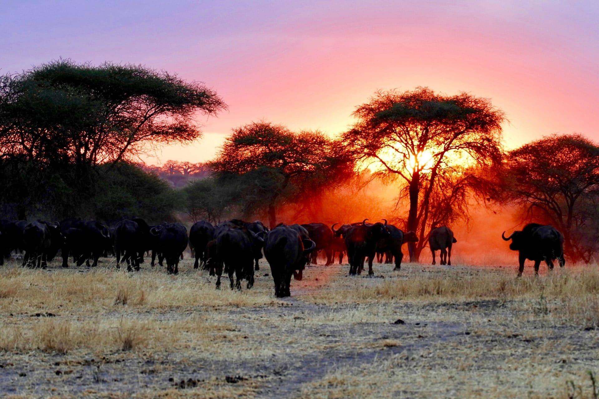 Safari in Tanzania, Africa