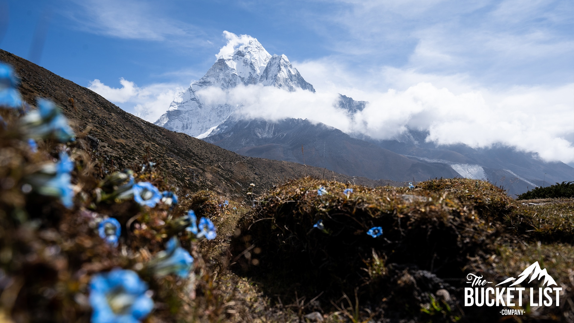Mount Everest in the background, with some beautiful blue flowers infront.