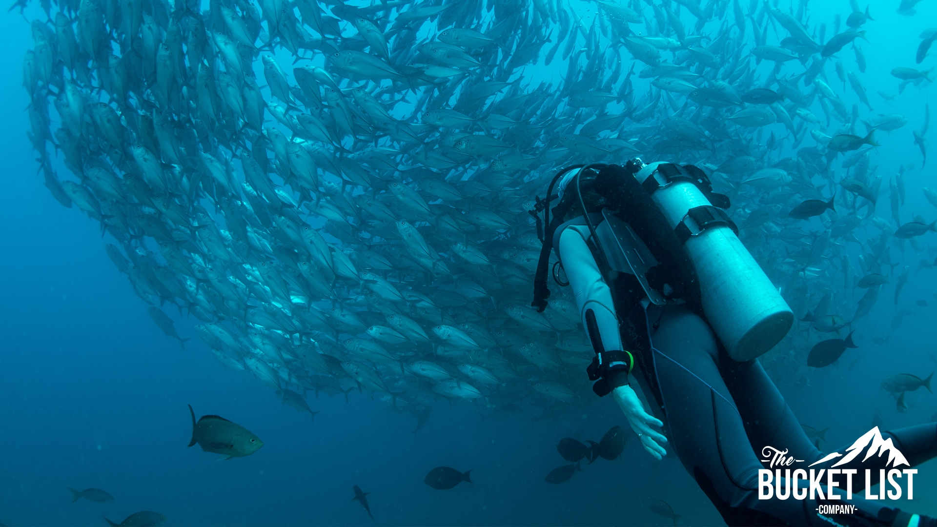 Scuba Diving in Gozo with a group of fish